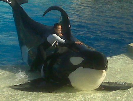 Shamu Is the God of Many